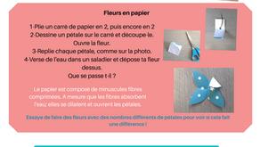 Les petits scientifiques : les fleurs de papiers