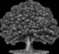 oasis_logo.png