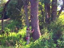 Buying Logs/Timber