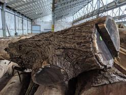 A Very Special Walnut Log
