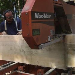 Sawing Poplar Timber
