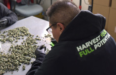 GREEN EDGE TRIMMERS - HARVEST YOUR FULL