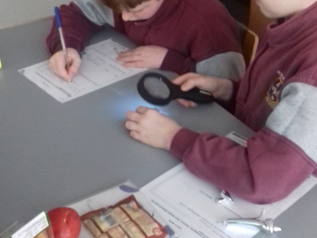 Geologists in 4th/5th class