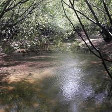 La Cueva de las manos Río Pinturas.jpg
