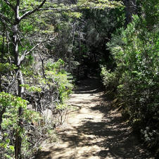 Parque Nacional Los Alerces 5.jpg