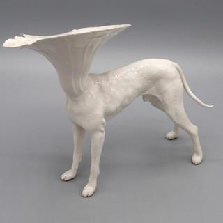 Dog4.jpg