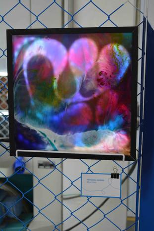 Exposição na Belas Artes