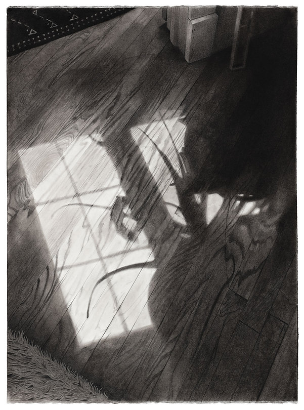 A charcoal drawing of a shadow of a plant on a wood floor.