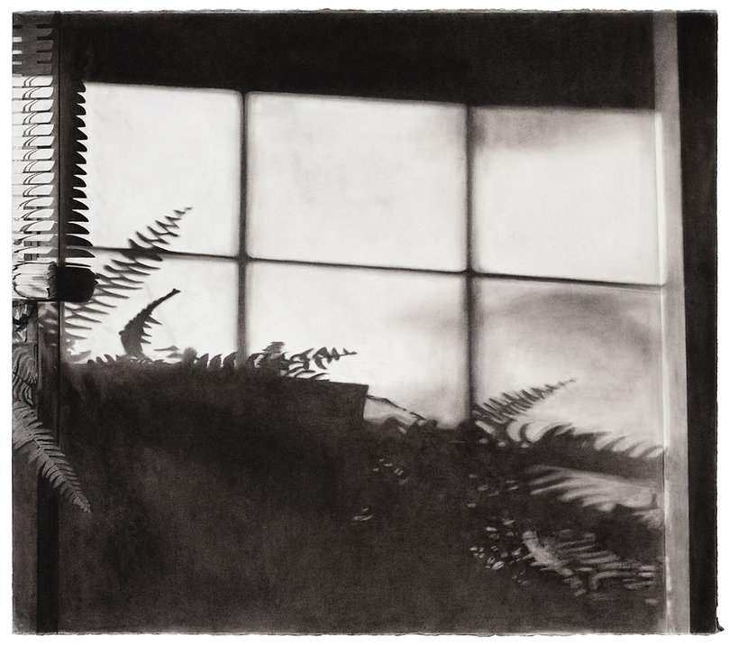 A charcoal drawing of the shadow of a fern cast across a wall.