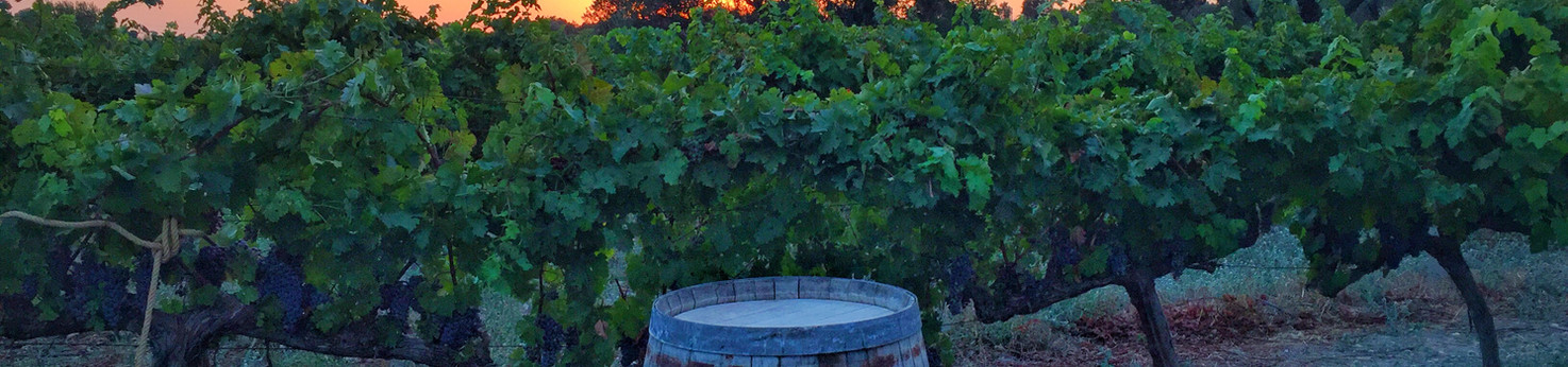 Exploring Urla Wine Route