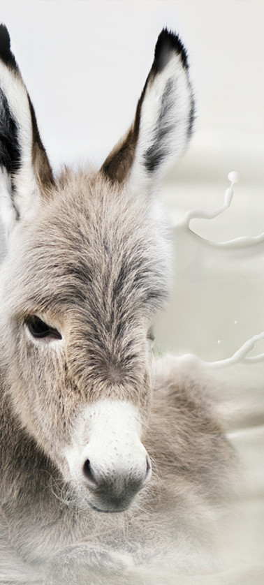 With Donkey Milk