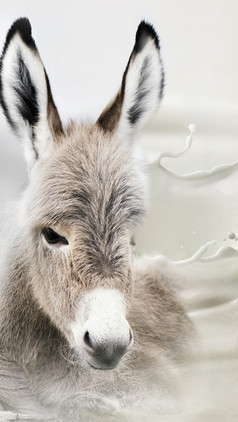 With Donkey Milk