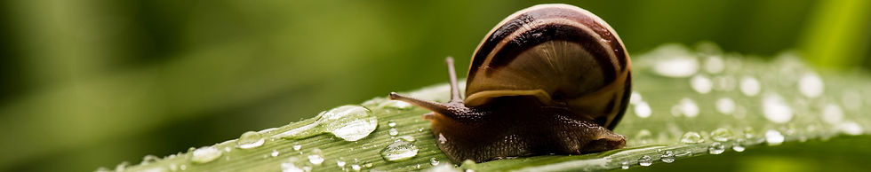 Olive oil soap with Snail Mucus