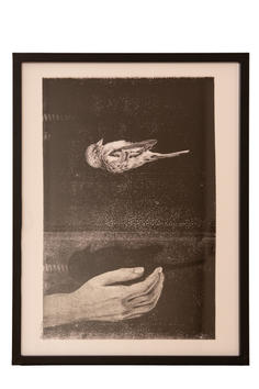 Dorien Dierckx - Vogelvlucht