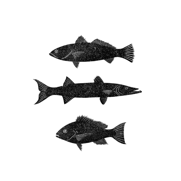 Three Fish_Transparent.png