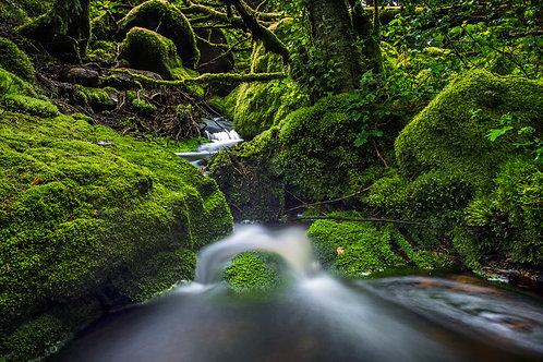 Fotografi: Mose og vann