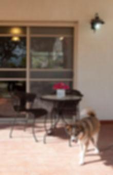 מבט אל הפרגולה במרפסת האחורית. וכלב המשפחה .