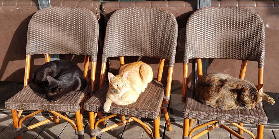 תמונה של זיכרון. שורה של כסאות ועליהם יושבים חתולים.