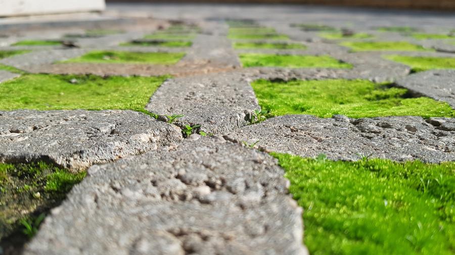 נקודת מבט. להסתכל מלמטה על אריחי בטון ודשא