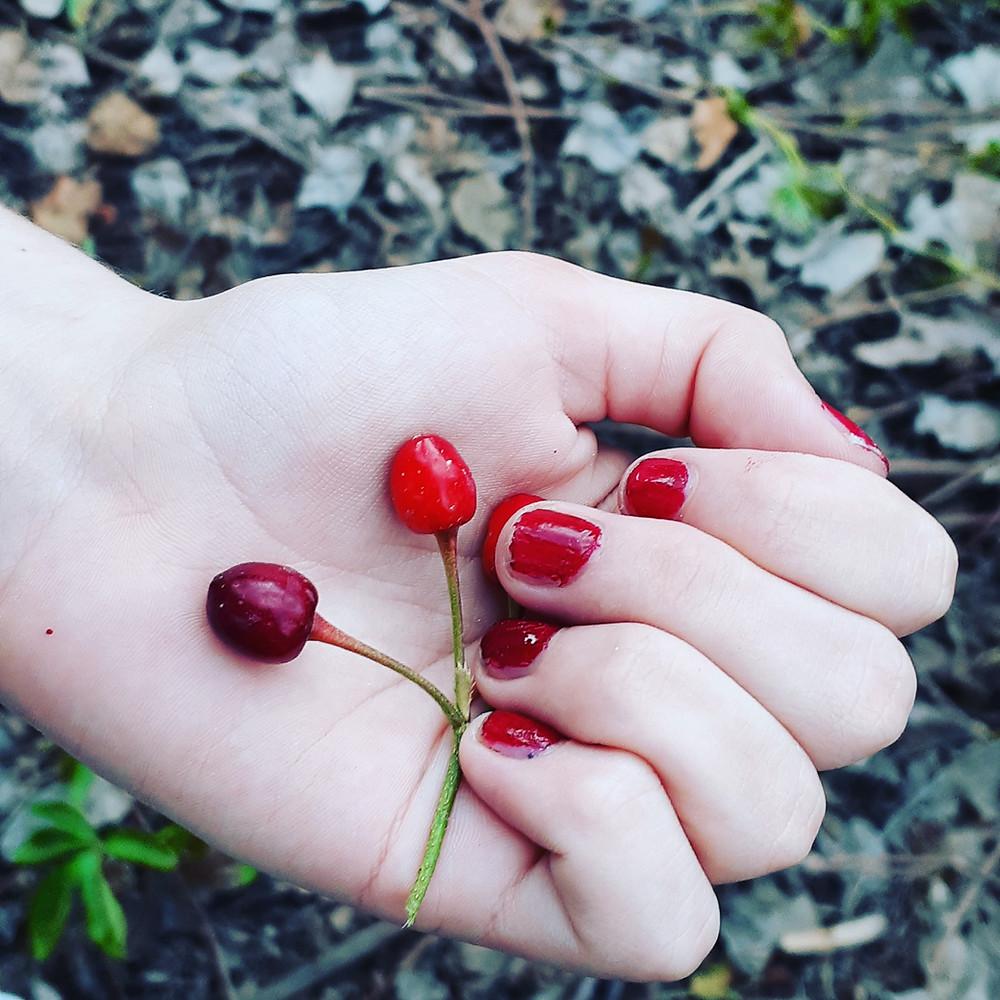 כף יד מחזיקה דובדבנים אדומים, ציפורניים משוכות בלק אדום.