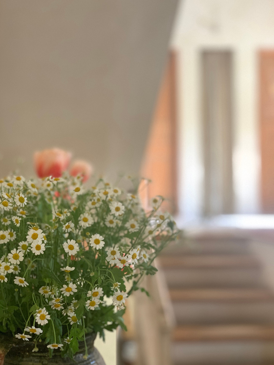 בית. פרחים צילום נעה בר לב דוידור