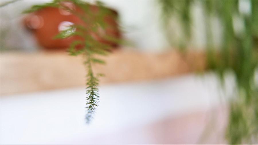תמונה של זיכרון. עציץ חרס ובו צמח ירוק.