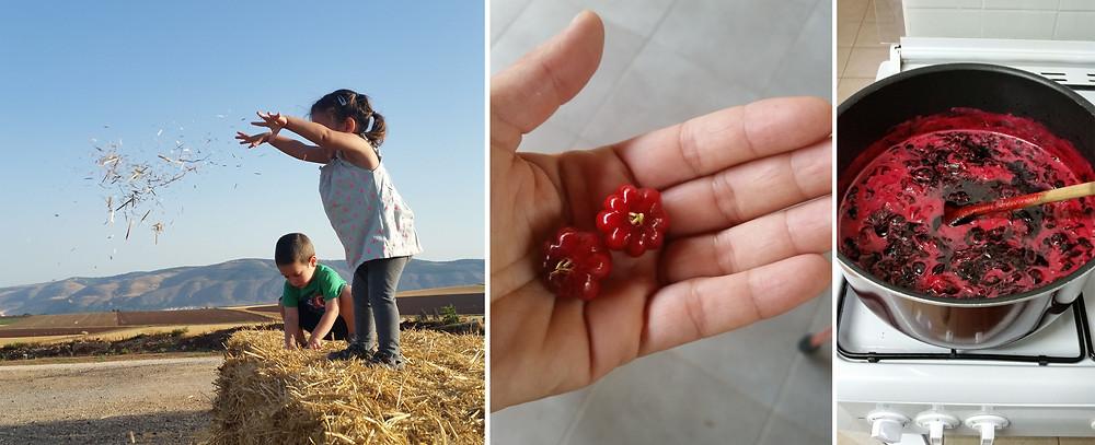 ריבת תות מתבשלת פיטנגו בשל וילדים זורקים קש מחבילת חציר