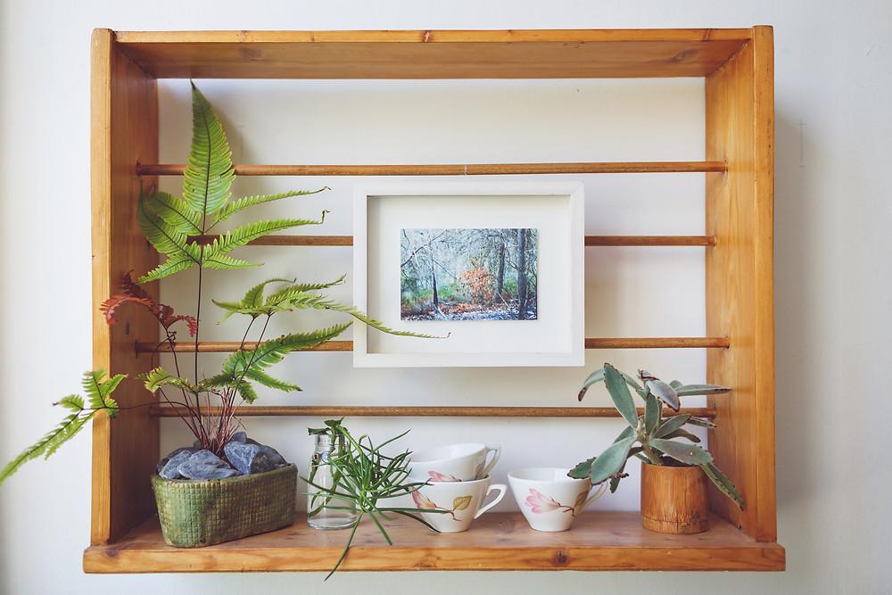 פרט מתוך בית בעיצוב דיקלה מנחם. מדף עץ ועליו מסודרים עציצים ותמונהה