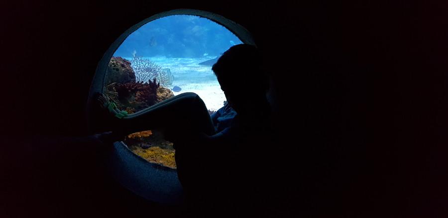 פינה במצפה התת ימי באילת. ילד יושב בתוך צינור וצופה על המים.