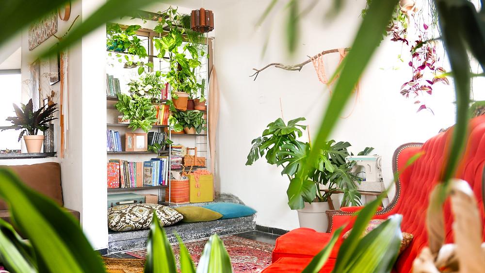 פינה ירקוה בבית, ספה כתומה, וספרייה מלאה בספרים ועציצים.