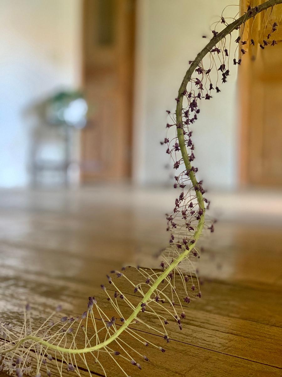 בית. פרח מת. צילום נעה בר לב דוידור