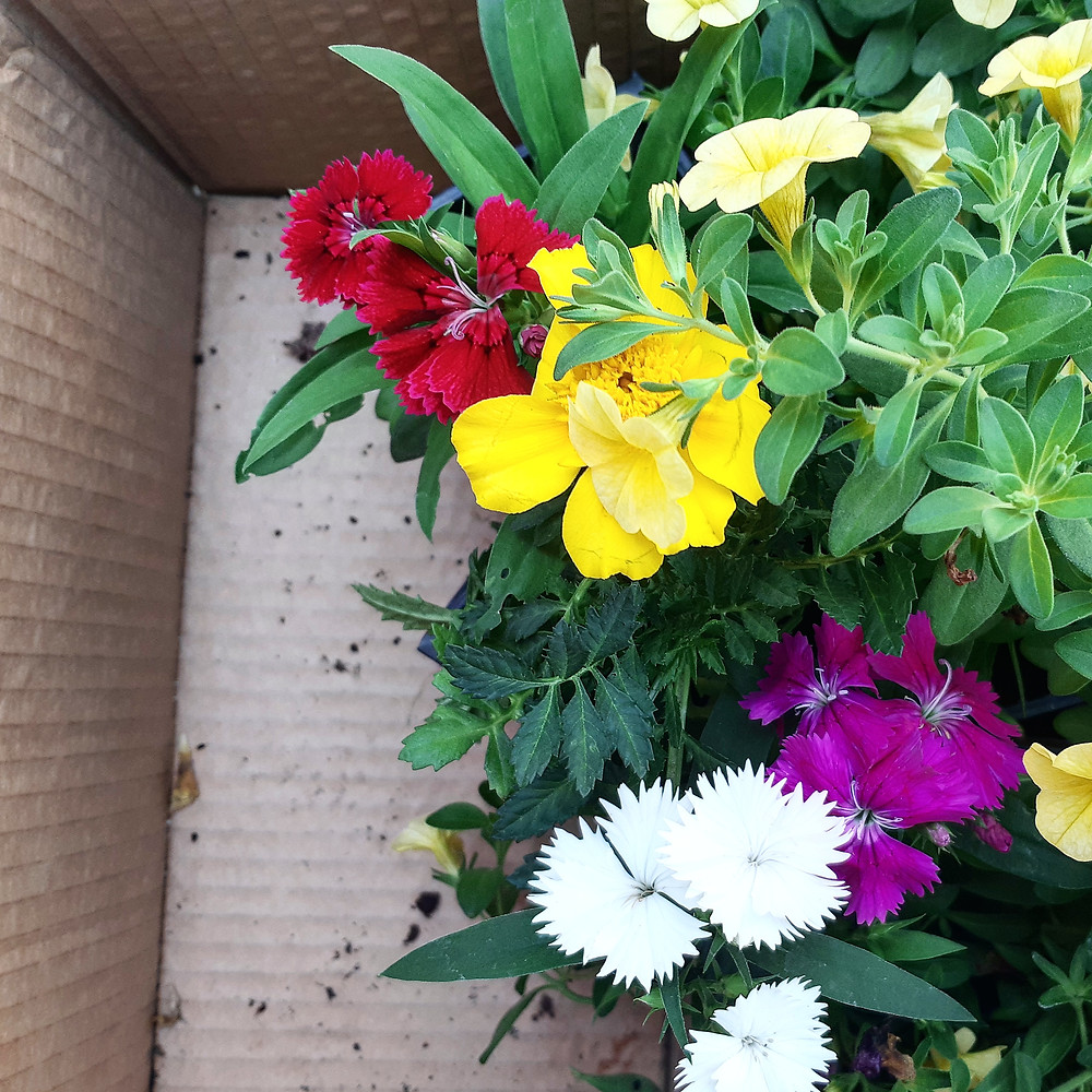 תמונות של בית. שתילים של פרחי עונה מונחים בתוך ארגז.