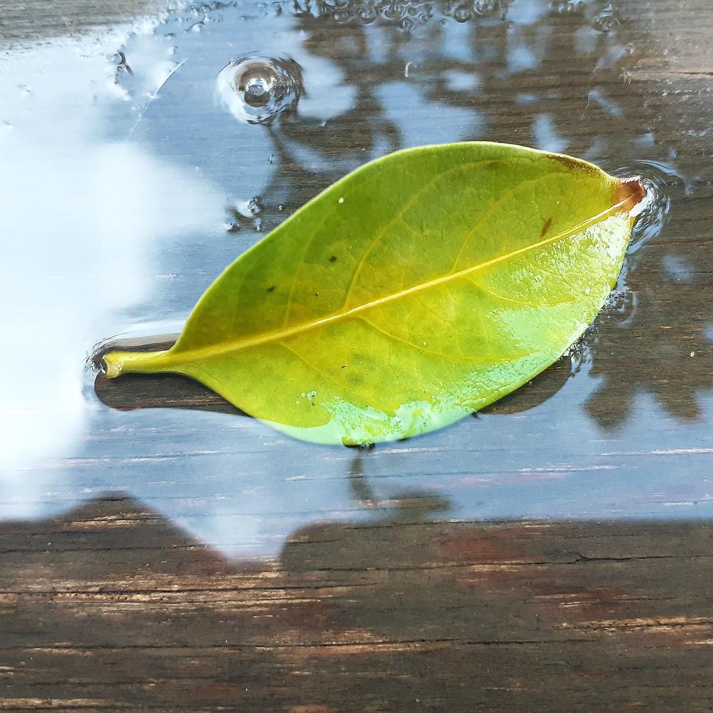 תמונות של רגש. עלה ירוק מונח בתוך שלולית מים.