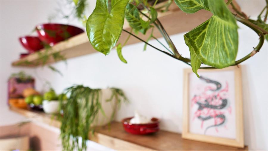מדפי עץ ועליהם כלים עם צמחים שונים. מתוך פרויקט פלנט סטיילינג