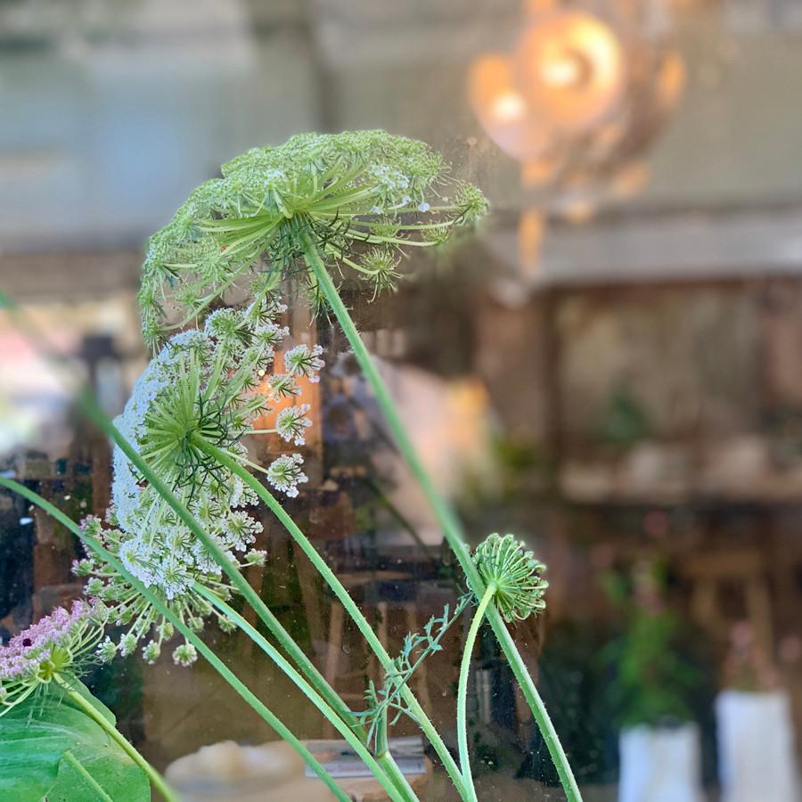 פרחים בסטודיו בילונגינג צילום נעה בר לב דוידור