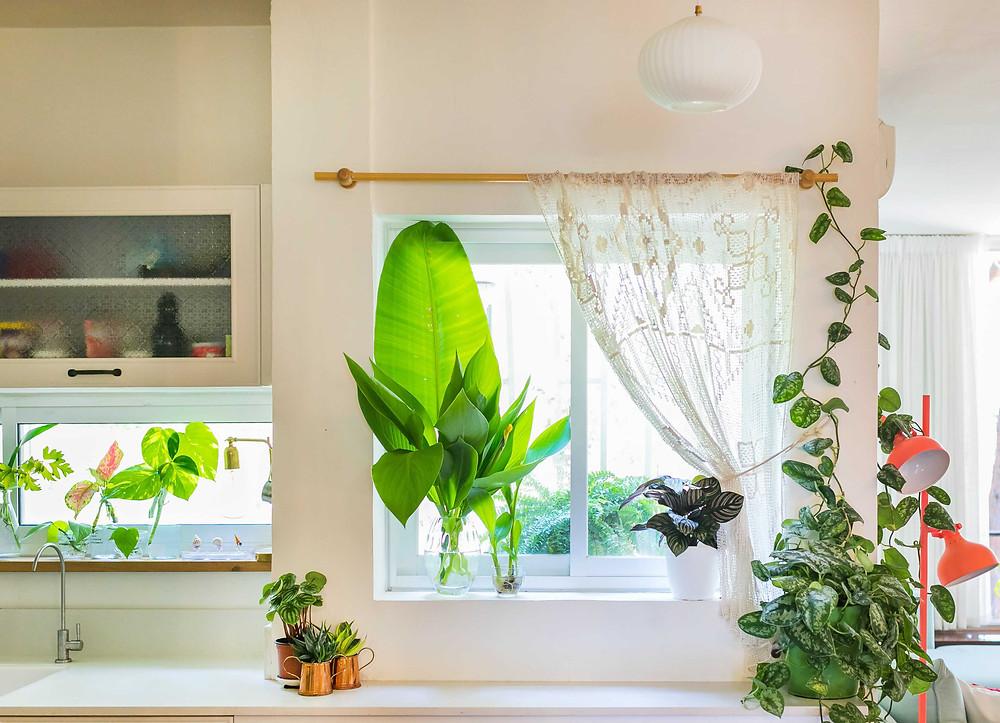 פרט מתוך חזית מטבח. עציצים ירוקים בדי קרושה רקומים וכלים יפים משלמים את התמונה.