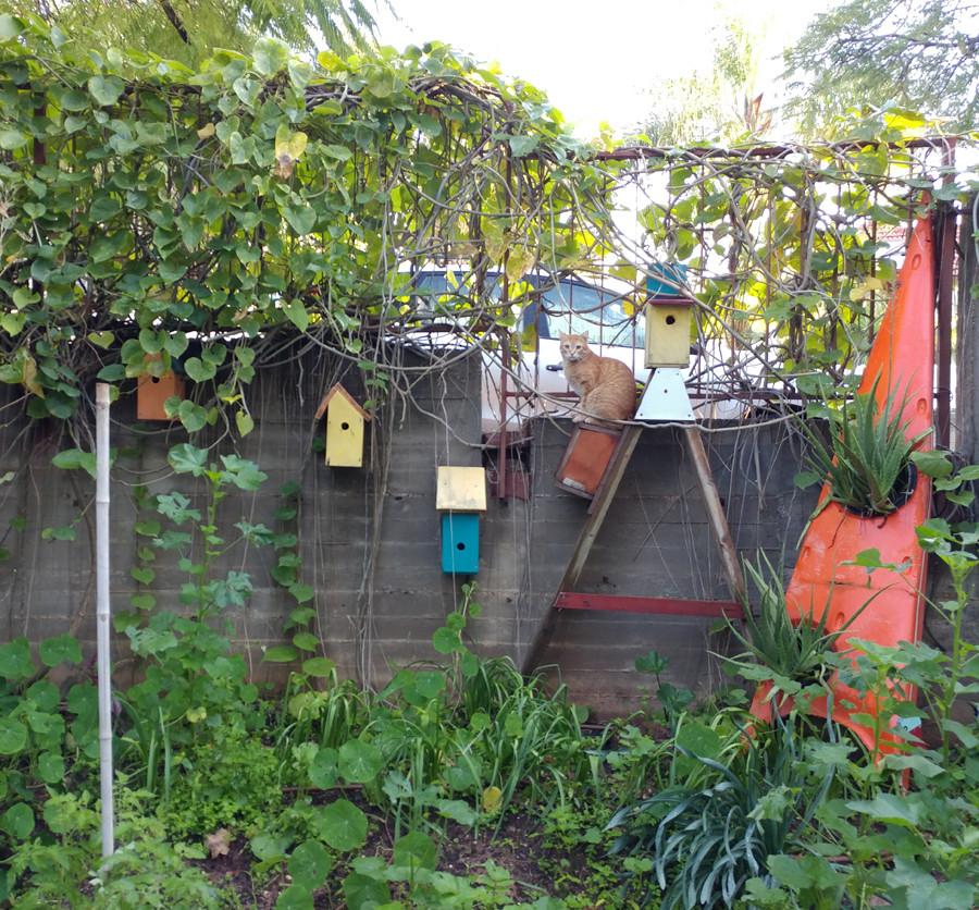 פינה מקסימה בגינה הביתית. חתול עומד עלסולם עץ ובתים לציפורים