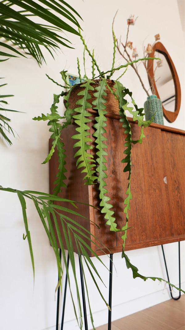 שידת וינטג' מיד סנצ'רי ועליה צמחים בכלים שונים.