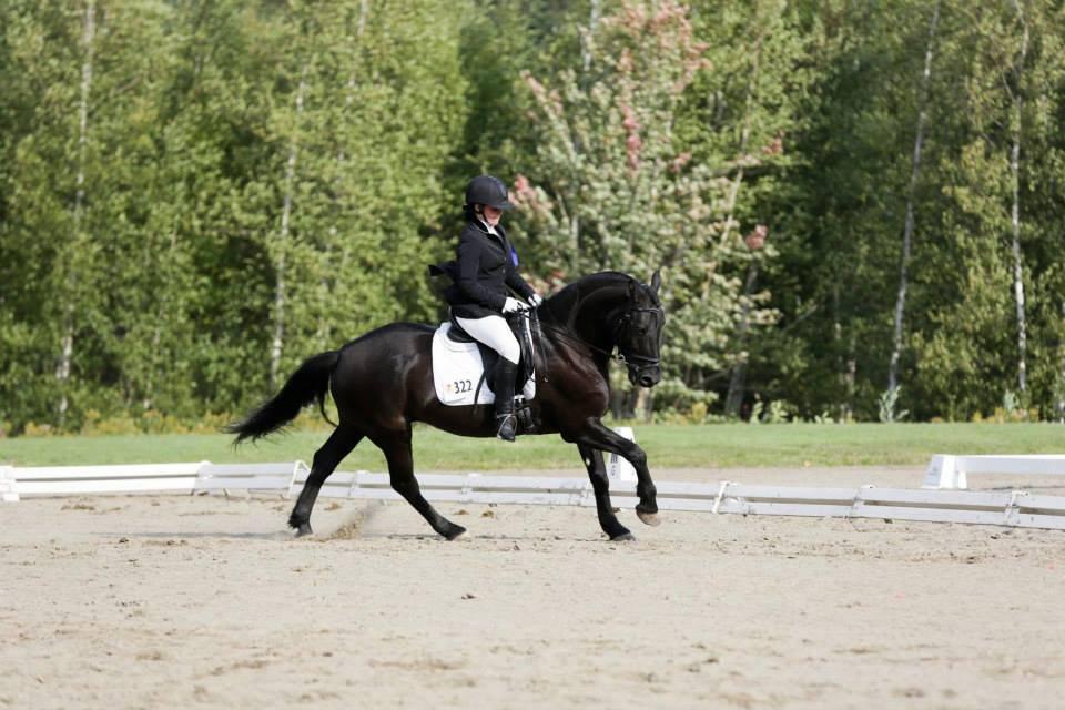Leçon 1h avec un cheval école