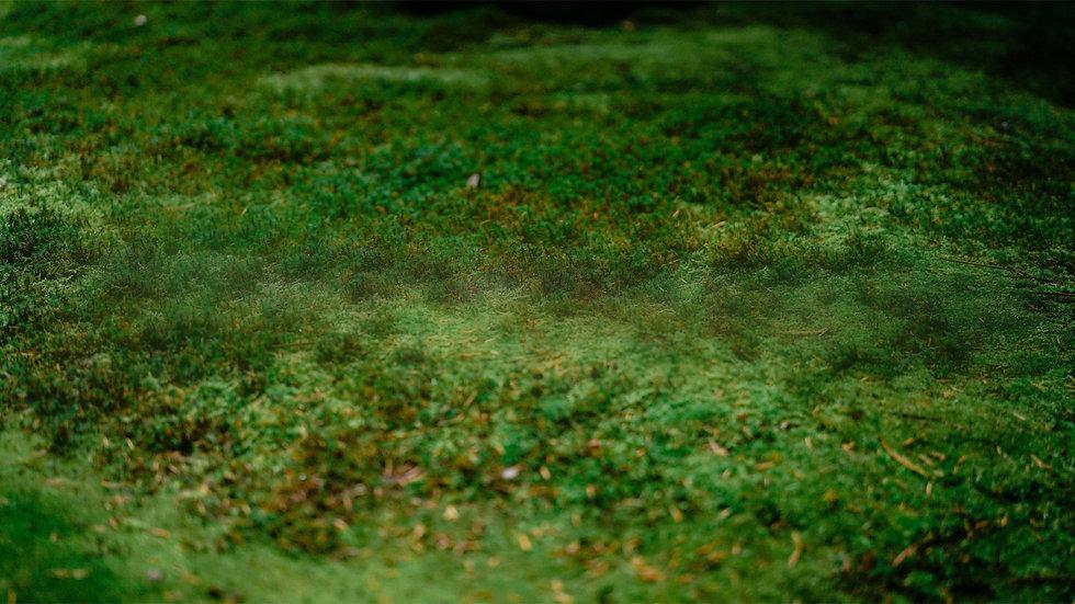 Green Moss BG Only.jpg