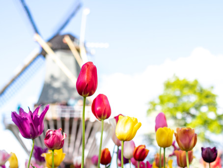 5 Things I Love About Spring in Amsterdam