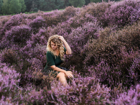 Heather Fields in the Netherlands