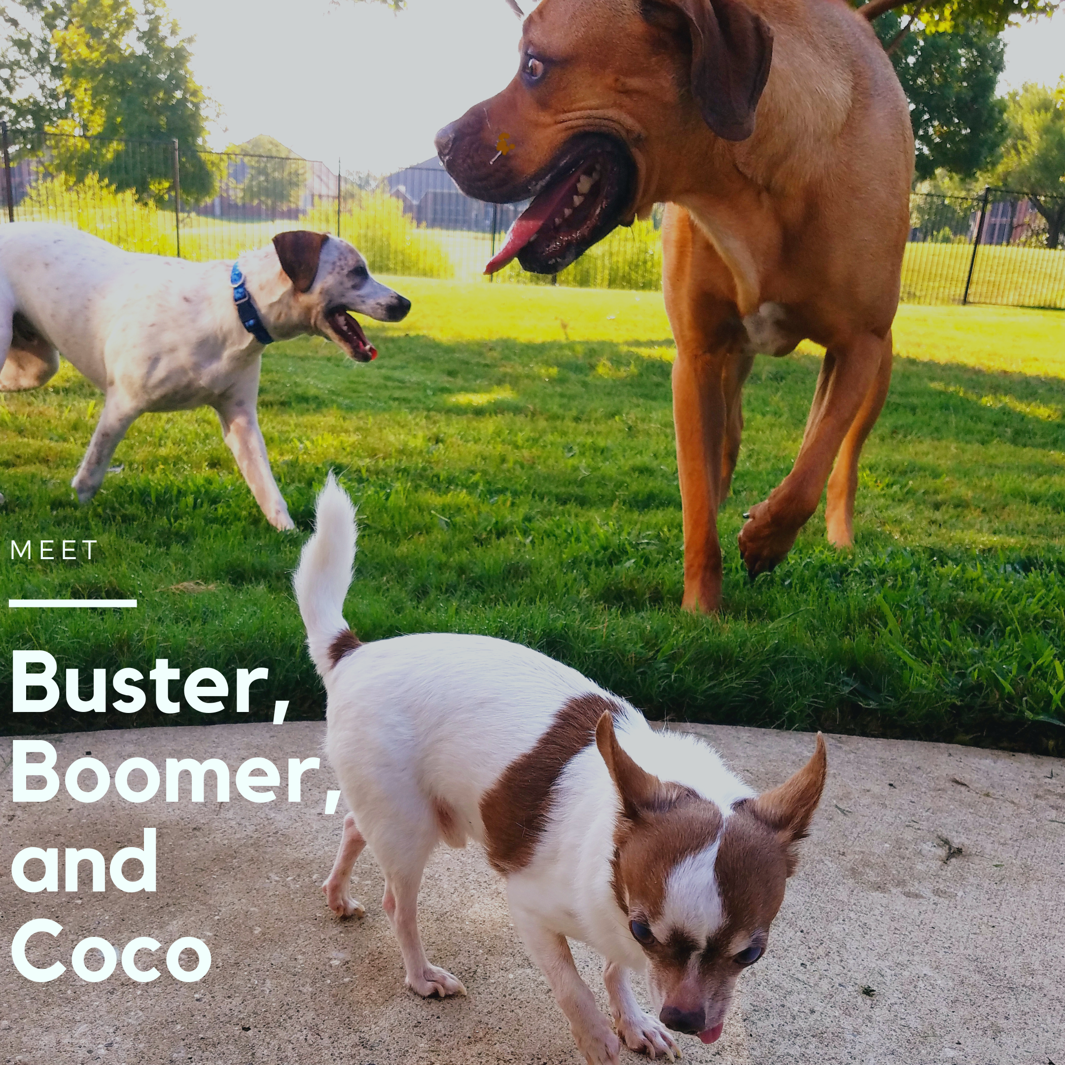 Buster_Boomer_Coco.png