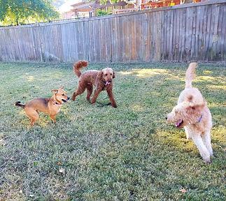 backyard play time.jpg