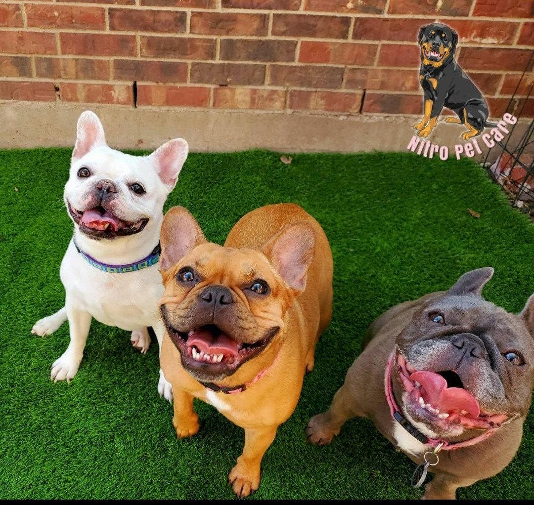 Overnight Lodging (3 Dogs)