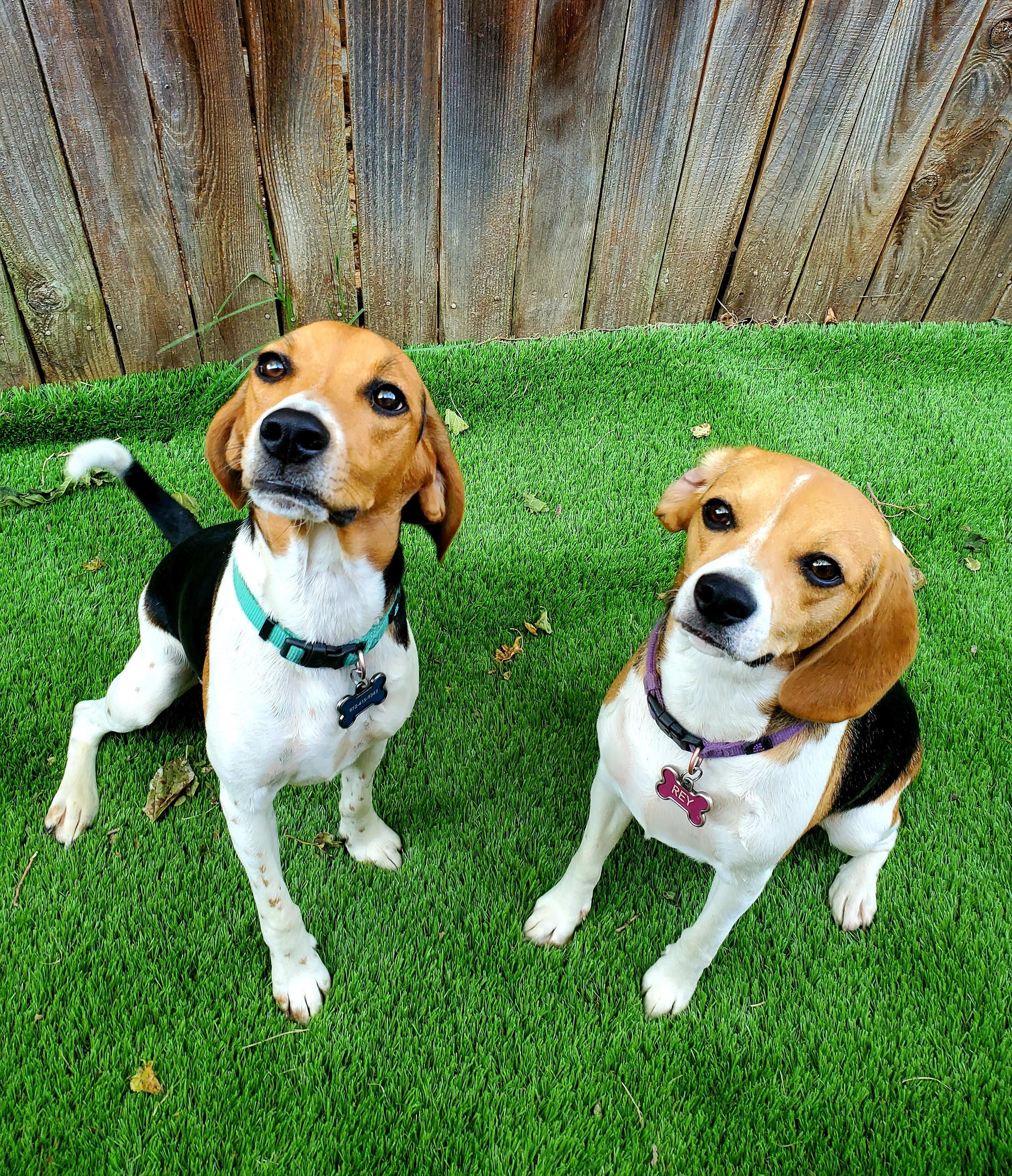 Overnight Lodging (2 Dogs)