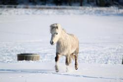 flira i snö