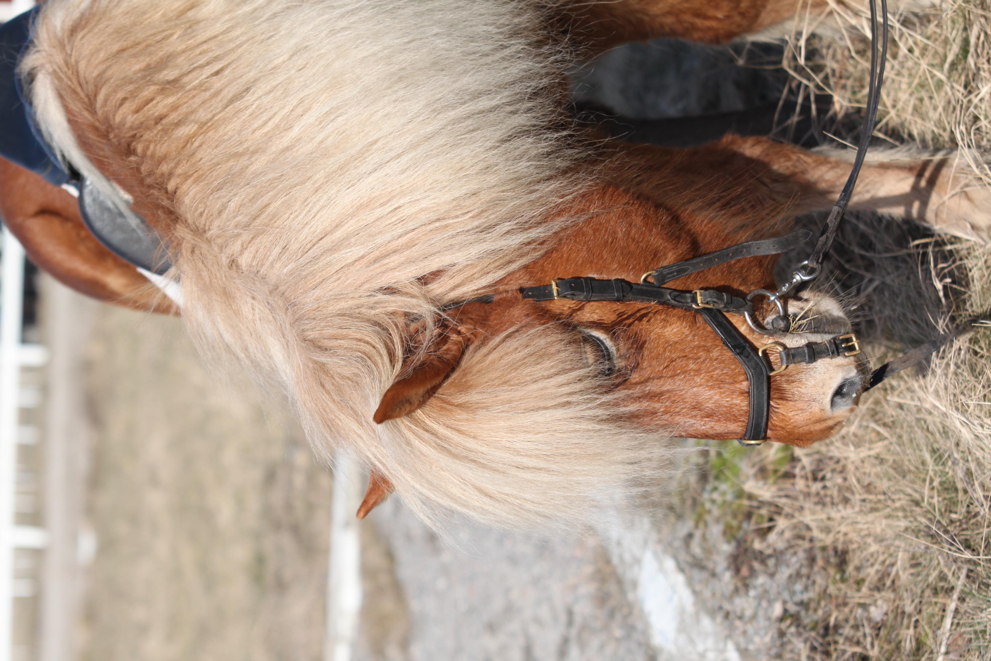 Lenas häst efter ridpasset