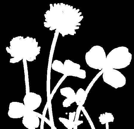 trefle-blanc-01_edited.png
