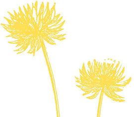 2-fleurs-jaune copy.jpg